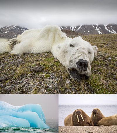 Global Warming Images - Svalbard