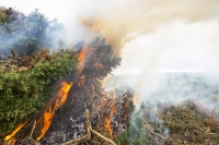 Cornwall;UK;coast;sea;moor;moorland;conservation;Gorse;shrub;clearing;habitat;burn;burning;fire;smoke;smoking;scrub;scrub-clearance;Zennor;bosigran