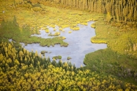 Athabasca;Alberta;Canada;Fort-McMurray;environment;Boreal-Forest;tree;woodland;carbon-sink;conifer;spruce;habitat;woodland;green;forest;water;pond;lake;swamp;Muskeg;peat;vegetation;aerial;aerial-photograph;clearing