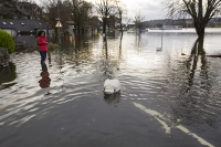 Floods;flooding;flooded;Ambleside;Cumbria;Lake-District;UK;weather;extreme-weather;climate-change;global-warming;deluge;torrential-rain;downpour;meteorology;low-pressure;weather-front;rain;raining;heavy-rain;precipitation;wet;sodden;surrounded;marooned;insuramnce;insurance-claim;pier;Ambleside;Mute-Swan;bird