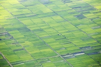 Malawi;Africa;agriculture;green;food-crop;crops;rice;rice-paddy;aerial;boundary;geen;Shire-Valley;path;track;road;woodland;wet;water;pond;swamp;boundary;field-boundary;pattern;mosaic;fertile;sustainable-agriculture;subsistence-farming