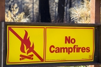USA;US;America;California;drought;climate-change;global-warming;dried-up;wild-fire;bush-fire;King-Fire-El-Dorado-National-Forest;Georgetown;forest;tree;conifer;pine-tree;woodland;destroyed;destruction;black;blackened;smoke;smoking;burn;burning;burnt;devastation;air-pollution;air-quality;carbon;greenhouse-gas;particles;ash;habitat;consequence;sun;sunlight;aftermath;yellow;red;warning;no-campfires