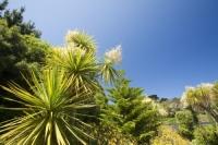 Cornwall;UK;coastal;sea;atlantic;ocean;sky;blue;outdoors;landscape;summer;sun;Tresco;island;Scilly;Scilly-Isles;Isles-of-Scilly;Gulf-Stream;mild;tropical;North-Atlantic-Drift;sea-temperature;ocean-current;vegetation;climate-change;global-warming;Abbey-Gardens;garden;gardening;tropical-plant;tree;palm;palm-tree