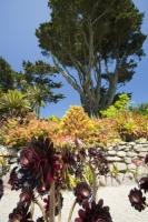 Cornwall;UK;coastal;sea;atlantic;ocean;sky;blue;outdoors;landscape;summer;sun;Tresco;island;Scilly;Scilly-Isles;Isles-of-Scilly;Gulf-Stream;mild;tropical;North-Atlantic-Drift;sea-temperature;ocean-current;vegetation;climate-change;global-warming;Abbey-Gardens;garden;gardening;tropical-plant