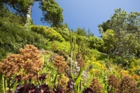 Cornwall;UK;coastal;sea;atlantic;ocean;sky;blue;outdoors;landscape;summer;sun;Tresco;island;Scilly;Scilly-Isles;Isles-of-Scilly;Gulf-Stream;mild;tropical;North-Atlantic-Drift;sea-temperature;ocean-current;vegetation;climate-change;global-warming;Abbey-Gardens;garden;gardening;tropical-plant;cacti