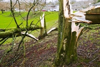 gale-storm-wind-severe-weather-hurricane-global-warming-clear-up;cumbria;uprooted-damage-destroyed-force-power-powerful-nature-extreme;climate-change;destruction;damage;blown-over;uprooted;snapped