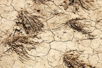China;climate-change;global-warming;dry;drought;water;water-shortage;food;food-production;crops;food-security;food-shortage;crop-yield;farming;food-supply;withered;dead;dying;dried-out;cracked;soil;dessicated