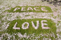 Ambleside;UK;grass;green;lawn;pink;cherry;cherry-blossom;blossom;spring;shape;art;heart;heart-shape;symbol;petal;petals;romance;romantic;love;season;nature;pattern;carpet;covering;peace;peaceful;peace-and-love;hippy;writing;word;letter
