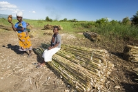 Malawi;Africa;Shire-Valley;woman;fishing;dried-fish;sugar-cane;crop;baby