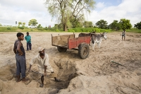 Malawi;Africa;Shire-Valley;Chikwawa;sediment;sand;man;male;labourer;donkey;cart;horse-drawn-cart;hard-work;shovel;shovelling;raw-materials;building-sdand;river-sand;river-bed;flood-plain