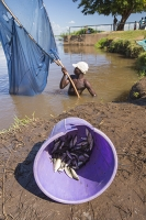 fisherman;catching;fish;Shire-river;Nsanje;Malawi;net;fishing;poor;poverty;river;water;subsistence;netting;fishing-net;bucket;purple;catch