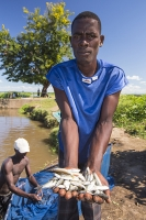 fisherman;catching;fish;Shire-river;Nsanje;Malawi;net;fishing;poor;poverty;river;water;subsistence;netting;fishing-net;catch