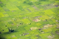 Malawi;Africa;Shire-Valley;Shire-River;aerial;aerial-photography;green;fields;rice;rice-paddy;crop;food-crop;pattern;shape