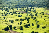 Malawi;Africa;Shire-Valley;Shire-River;aerial;aerial-photography;green;fields;crop;food-crop;pattern;shape;tree;Maize;fields