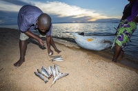 Malawi;Africa;Lake-Malawi;Cape-Maclear;sunlight;tropics;boat;tranquil;peaceful;water;canoe;dug-out-canoe;traditional;blue;beach;sand;sandy;sandy-beach;fishing;man;male;paddle;paddling;fisherman;fish;catch;food;sunset;dusk