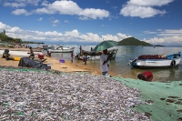 Malawi;Africa;market;road;African-market;market-stall;retail;economy;fish;dried-fish;protein;Lake-Malawi;Cape-Maclear;fish-drying;preserve;food-preservation;small-fish;drying-rack;sky;blue;cloud;colourful;umbrella;shade;parasol;shelter
