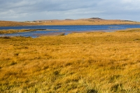 Assynt;North-West-Highlands;Scotland;headland;moorland;remote;isolated;house;croft;crofting;croft-house;Rubha-Coigeach;peak;orange;glow;glowing;Deer-grass;bog;peat-bog;cabon-sink;water;lake;loch;lochan
