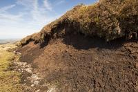 Nisbet;Southern-Uplands;Biggar;Scotland;UK;hill;moor;moorland;Spring;sky;blue;heather;vegetation;peat;carbon-sink;climate-change;carbon;sequestration;blanket-peat-bog;peat-bog;carbon-sink;carbon-store;Borders;erosion;eroded;King-Bank-Head;soil;subsoil
