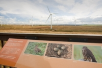 Scotland;Lanarkshire;climate-change;global-warming;energy;power;renewable-energy;clean-energy;carbon-neutral;wind-power;wind-farm;wind-turbine;carbon-footprint;moorland;sky;blue;cloud;Whitelee;Whitelee-windfarm;Eaglesham;Eaglesham-moor;sustainable;sustainability;large;MW;megawatt;output;energy-needs;energy-production;electricity-production;rotor;turbine;nacelle;Scottish-Power;energy-company;investment;green-investment;information;explanation;education;habitat;Snipe;nesting;nest;eggs;Merlin;interpretation-boards