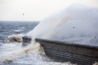 Whitehaven;Cumbria;UK;weather;extreme-weather;harbour;wall;battering;wave;crashing;breaking;storm;wind;windy;low-pressure;weather-bomb;West-Coast;Irish-Sea;stormy;stormy-weather;high-tide;wave-height;overpowering;power;powerful;wave-power;spray;salt-spray;Gull;seagull;bird;flight;fly