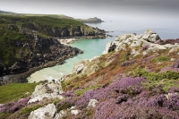 Zennor;Cornwall;UK;coast;sea;Atlantic-ocean;headland;edge;moor;moorland;heather;flower;flowering;pink;heather;ling;Calluna-vulgaris;summer;August;blooming;flowering;carpet;Bell-Heather;Erica-cinerea;sea-cliff;vegetation;flora;grass;gorse;gorse-bush;bay;inlet;sea-cliff;turquoise;aquamarine;promontary;landscape;colourful;Pendour-Cove