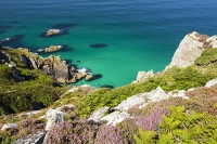 Cornwall;UK;coast;sea;Atlantic-ocean;headland;edge;moor;moorland;heather;flower;flowering;pink;heather;ling;Calluna-vulgaris;summer;August;blooming;flowering;carpet;sea-cliff;vegetation;flora;bay;inlet;sea-cliff;turquoise;aquamarine;promontary;landscape;colourful;cliff;sea-cliff;crag;Granite;Igneous;weathering;erosion;coastal-erosion;Bosigran
