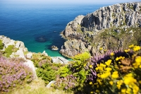 Cornwall;UK;coast;sea;Atlantic-ocean;headland;edge;moor;moorland;heather;flower;flowering;pink;heather;ling;Calluna-vulgaris;summer;August;blooming;flowering;carpet;sea-cliff;vegetation;flora;bay;inlet;sea-cliff;turquoise;aquamarine;promontary;landscape;colourful;cliff;sea-cliff;crag;Granite;Igneous;weathering;erosion;coastal-erosion;Bosigran;yellow;flower