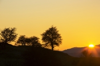 Lake-District;Cumbria;UK;national-park;Autumn;Fall;tree;woodland;autumn-colours;gold;orange;colourful;sunset;glow;Hawthorn;Coniston-Old-Man;peak;mountain;hill;silhouette