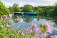 water;river;Fossdyke;Lincoln;lincolnshire;UK;navigation;navigable;boat;house-boat;moored;moorings;flower;wild-flower;spring;Red-Campion;river-bank;vegetation;lifestyle;carbon;low-carbon;efficient;green;environment;location