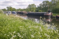 water;river;Fossdyke;Lincoln;lincolnshire;UK;navigation;navigable;boat;house-boat;moored;moorings;flower;wild-flower;spring;river-bank;vegetation;lifestyle;carbon;low-carbon;efficient;green;environment;location;cow-parsley;lush;verdant