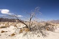 USA;US;America;California;Mojave-Desert;desert;sand;dry;fence;scrub;bush;vegetation;tumble-weed;sand-dunes;mountain;rocky;bush;dea;twig;branch