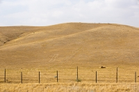 USA;US;America;California;desert;Tehachapi-Pass;brown;drought;dessicated;dried-up;climate-change;global-warming;tree;branch;dead;dying;killed;hill;farmland;parched;ranch;grass;brown