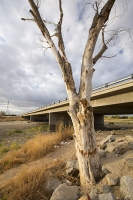 USA;US;America;California;brown;drought;dessicated;dried-up;climate-change;global-warming;parched;Kern-County;Kern-River;river-bed;burnt;Bakersfield;bridge;road;crossing;tree;dead;killed
