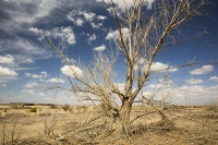 USA;US;America;California;brown;drought;dessicated;dried-up;climate-change;global-warming;parched;Kern-County;Kern-River;river-bed;burnt;Bakersfield;sand;sandy;tree;branch;dead;killed
