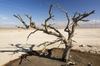 USA;US;America;California;brown;drought;dessicated;dried-up;climate-change;global-warming;parched;Kern-County;Bakersfield;Central-Valley;water-crisis;water-shortage;farming;soil;dust;dust-bowl;request;desperate;agriculture;tree;dead;killed