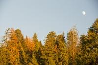 USA;US;America;California;light;sunlight;Yosemite-National-Park;Autumn;Fall;tree;mountain;forest;granite;rock;batholith;geology;weathering;erosion;igneous;dome;woodland;river;conifer;Pine-tree;fir-tree;brown;orange;colour;colourful;glow;orange;sunset;sky;moon