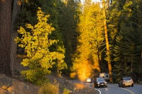 USA;US;America;California;light;sunlight;Yosemite-National-Park;Autumn;Fall;tree;mountain;forest;granite;rock;batholith;geology;weathering;erosion;igneous;dome;woodland;river;conifer;Pine-tree;fir-tree;brown;orange;colour;colourful;glow;orange;sunset;road;car;vehicle;vacation;road-trip;escape;open-road;winding;curve;bend
