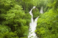 Ambleside;Lake-District;waterfall;woodland;green;tree;Cumbria;UK;nationalpark;river;stream;water;water-level;cascade;drop;leaf;flood;flooding;wet;damp;rainfall;rain;raining;flow;motion-blur;movement
