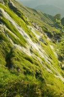 Stanah-Gill;Thirlmere;Lake-district;UK;Cumbria;water;waterfall;resource;gill;gully;ravine;rock;erosion;water-power;moss;green;clean;pure;fresh;cascade;hill;slope;steep;water-course;weather;wet;damp;vegetation;river;stream;environment;mossy;tumble;movement;gravity;splash;tumbling