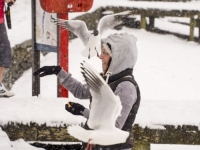 snow;Ambleside;Cumbria;UK;snowing;bird;feathers;plumage;weather;ornithology;lake;Windermere;beak;feet;orange;colourful;lake-shore;gull;seagull;Black-Headed-Gull;Larus-ridibindus;Chroicocephalus-ridibundus;woman;female;bird-feeding;red;life-belt