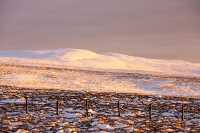 mountain;hill;weather;mist;misty;visibility;air-quality;high-pressure;winter;cold;snow;Hartside;vista;view;fence;Pennines;North-Pennines;Hartside;dusk;sunset;cloud;mountain-pass;contrast;snowpack;sunset;glow;warm;light;moorland;sedge;landscape;peat;Cross-Fell;tussock