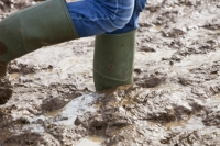 mud;muddy;field;churned-up;quagmire;wet;saturated;weather;rain;soil;trample;trampled;Lowther;Penrith;Cumbria;UK;World-Sheep-Dog-Trials;competition;event;wellies;wellingtons;wellington-boots;boots;walking;pink;board-walk;struggle;struggling;footwear;sink;sinking