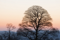 Ambleside;Cumbria;UK;winter;cold;pattern;shape;form;light;glow;warm;sunset;tree;branch;twig;Sycamore;bare