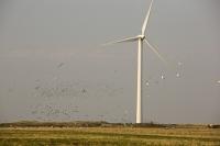 Cumbira;UK;Haverigg;renewable;renewable-energy;wind;wind-power;wind-farm;wind-turbine;carbon-neutral;climate-change;global-warming;generation;electricity;bird;flock;flocking;flight;fly;Starling;gull;seagull;bird-strike
